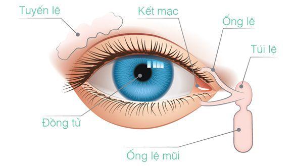 Ung thư biểu mô tế bào đáy ở mi mắt